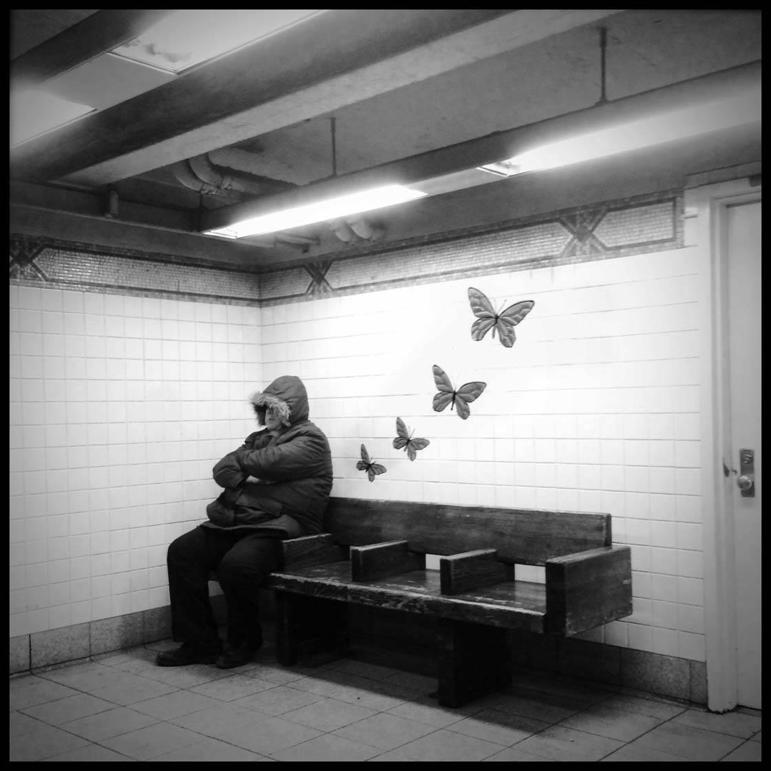 Sheldon Serkin iPhone Photos 24 no script