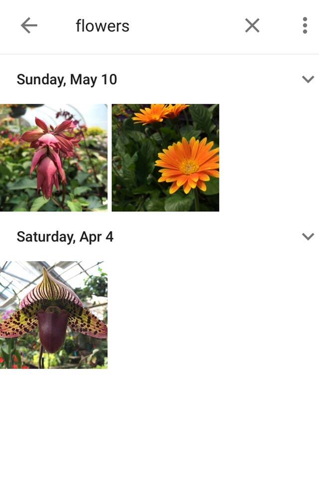 Google Photos App iPhone 5 no script