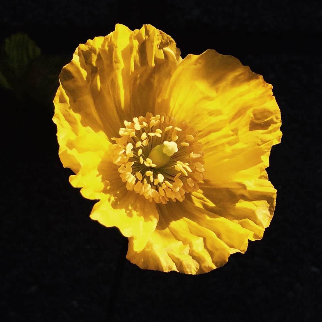 iPhone Flower Photography 32 no script