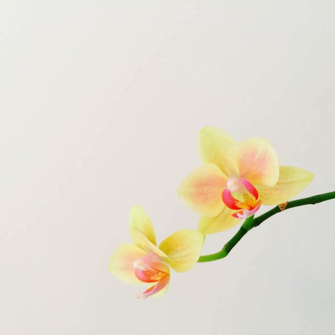iPhone Flower Photography 6 no script