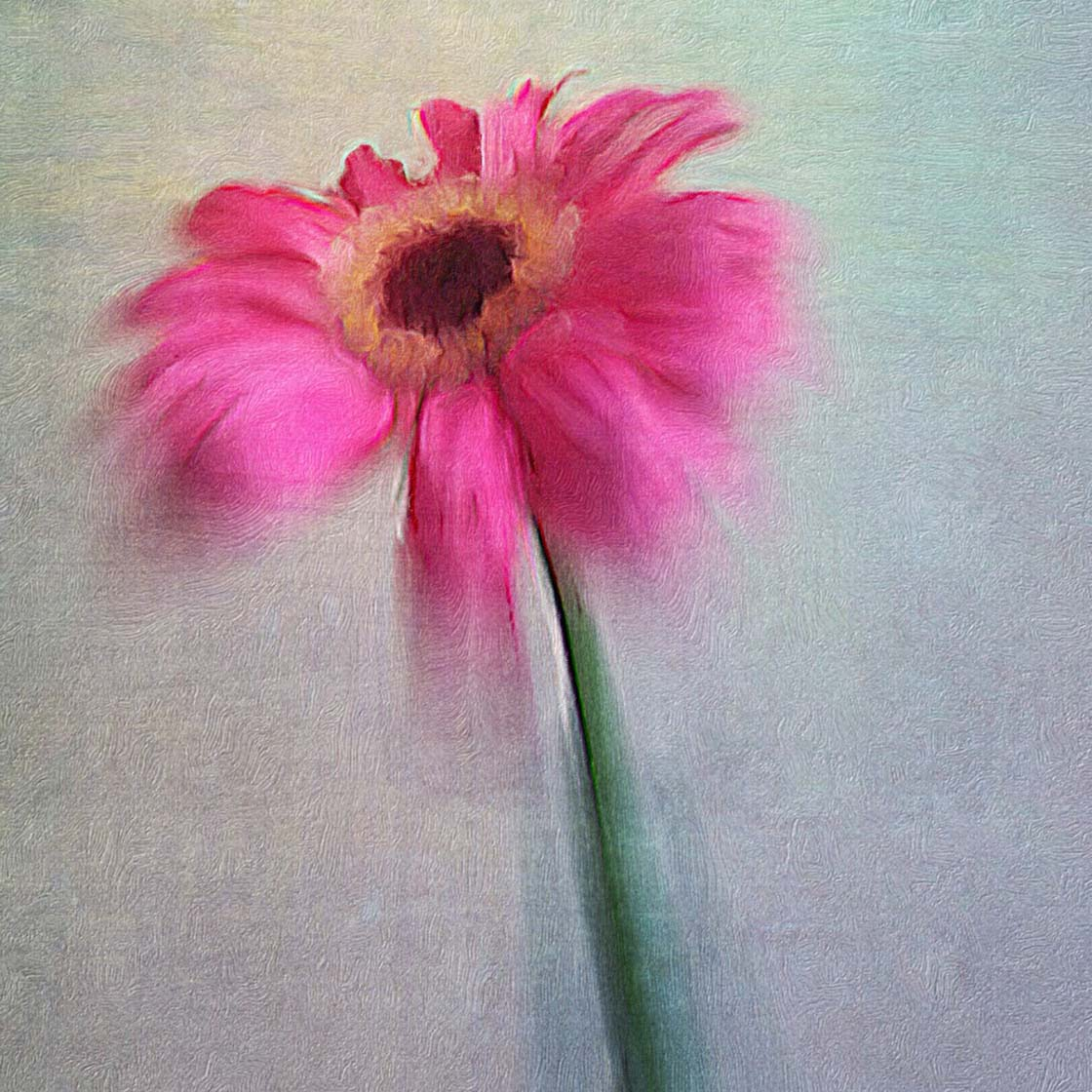 5 Ways To Enhance Your Flower Photos With iPhone Apps