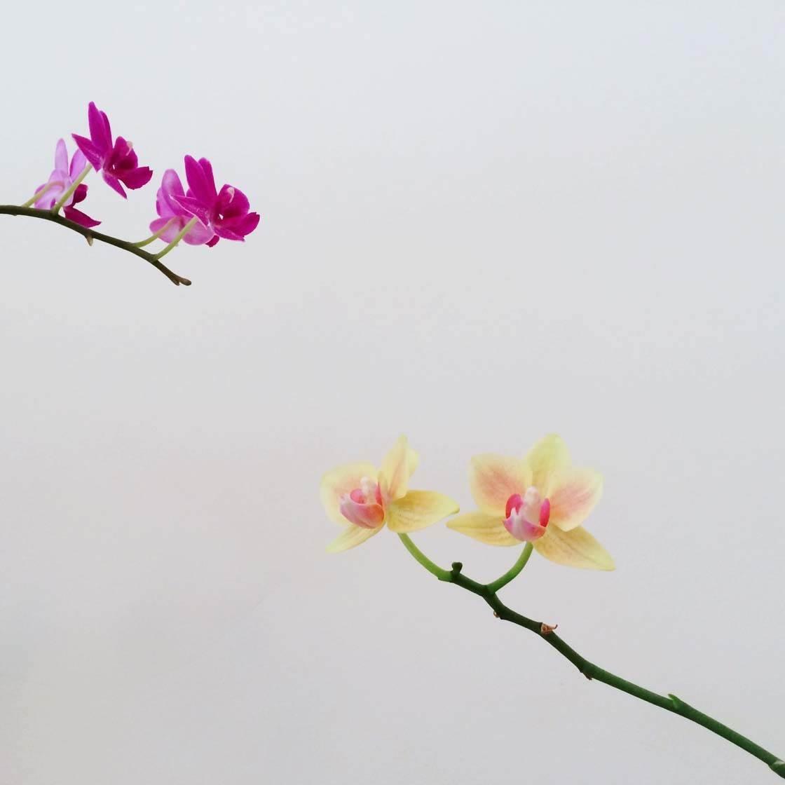 iPhone Flower Photography 25 no script