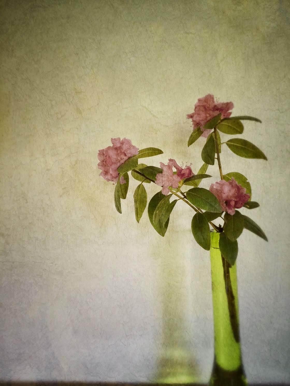 iPhone Flower Photos 3 no script