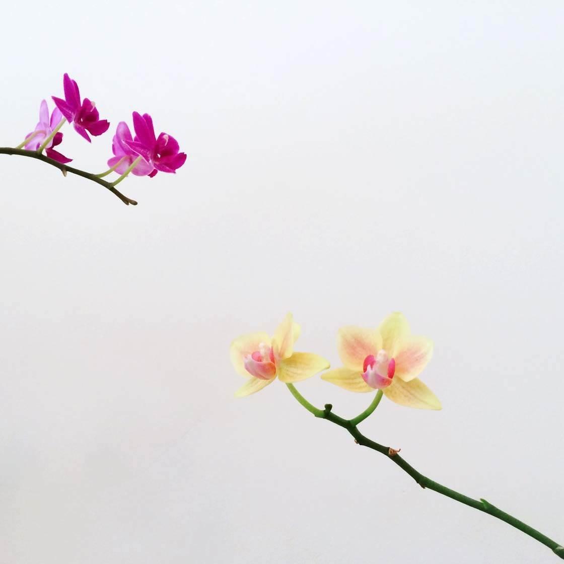 iPhone Flower Photography 43 no script