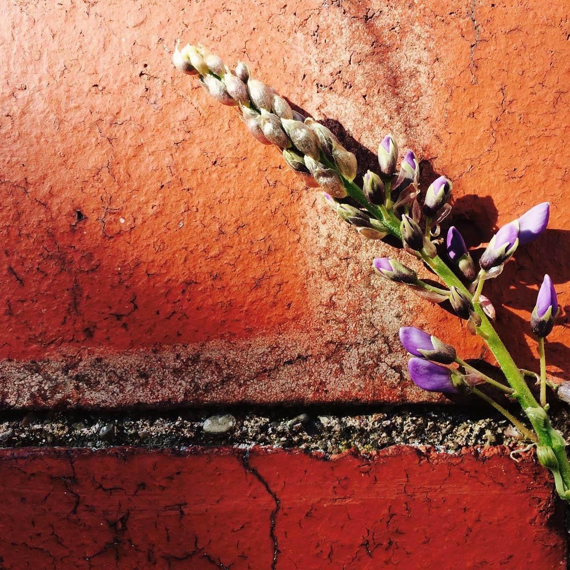 iPhone Flower Photography 27 no script