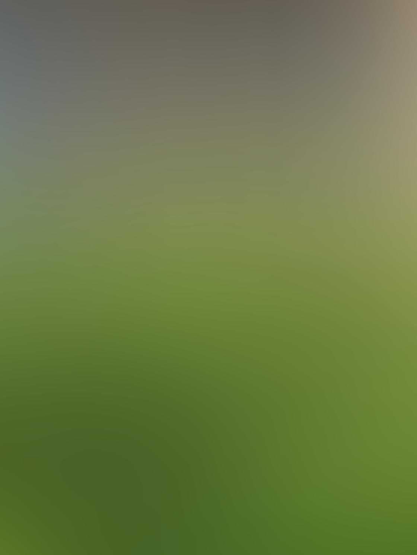 Green iPhone Photos 6