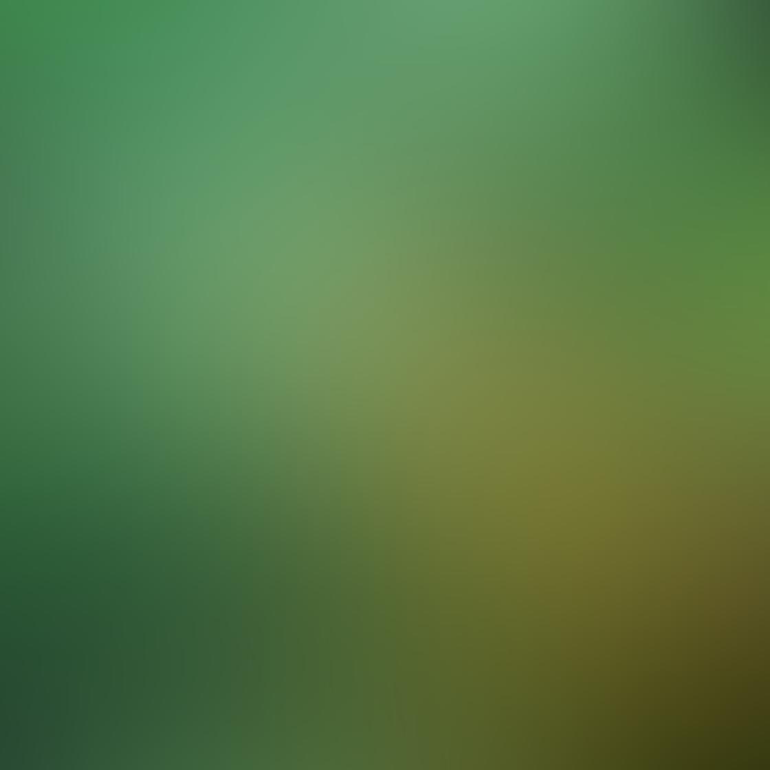Green iPhone Photos 23
