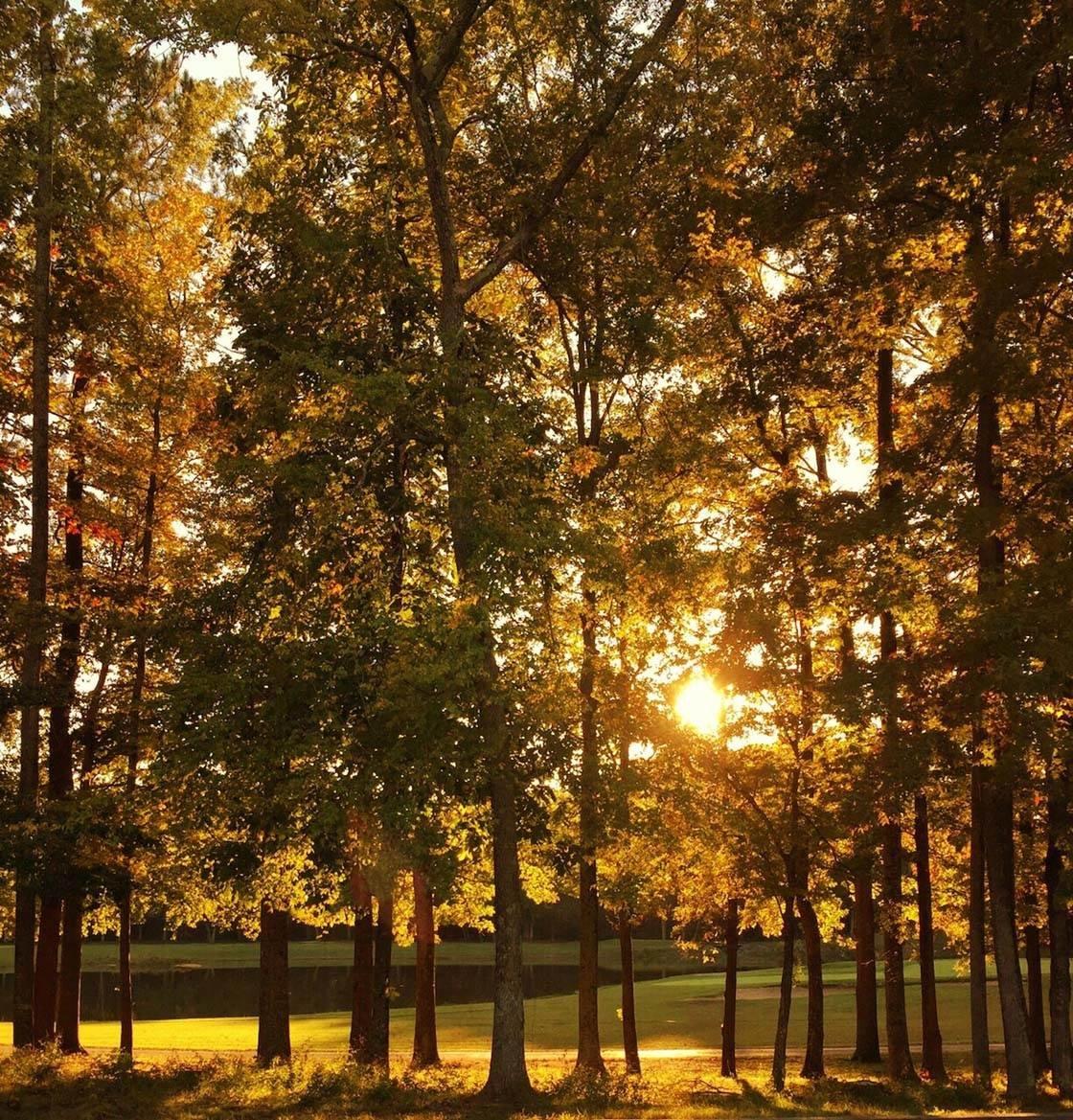 Landscape Scenery iPhone Photos 11 no script