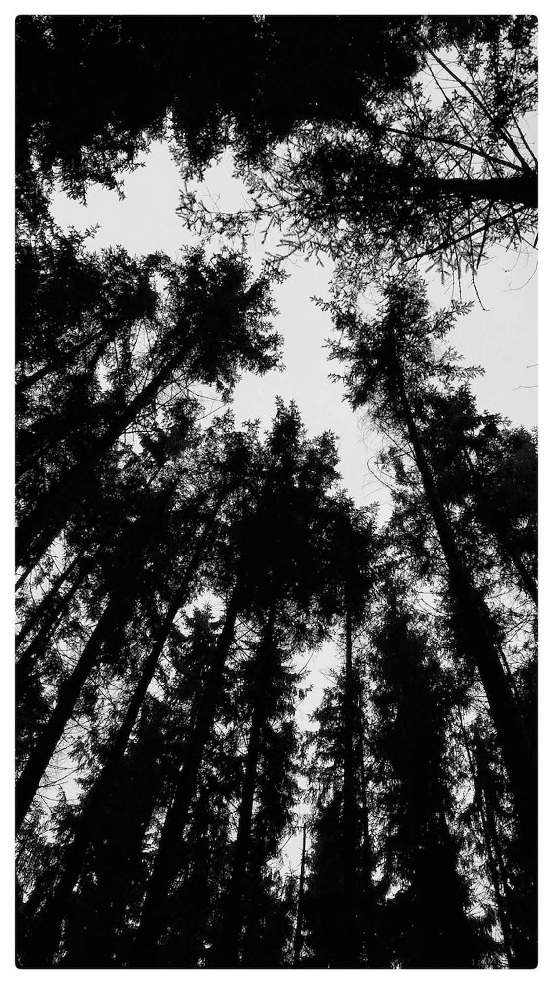 iPhone Photo Perspective 16 no script