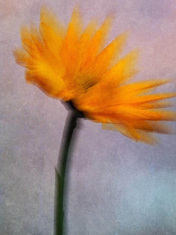 Floral Blur iPhone Photos 1 no script