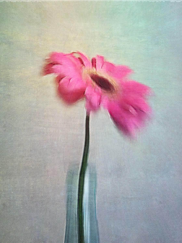 Floral Blur iPhone Photos 4 no script
