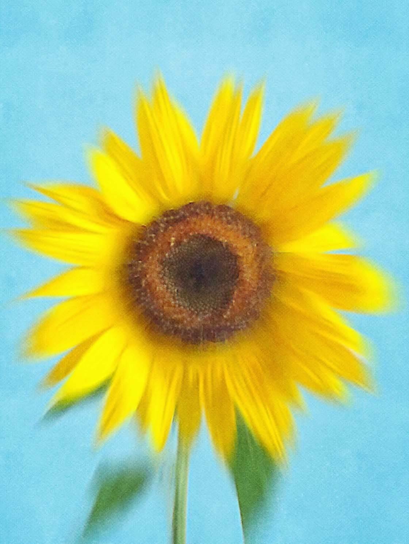 Floral Blur iPhone Photos 3 no script
