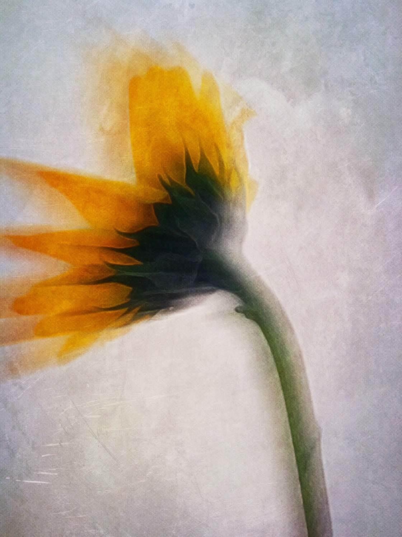 Floral Blur iPhone Photos 9 no script