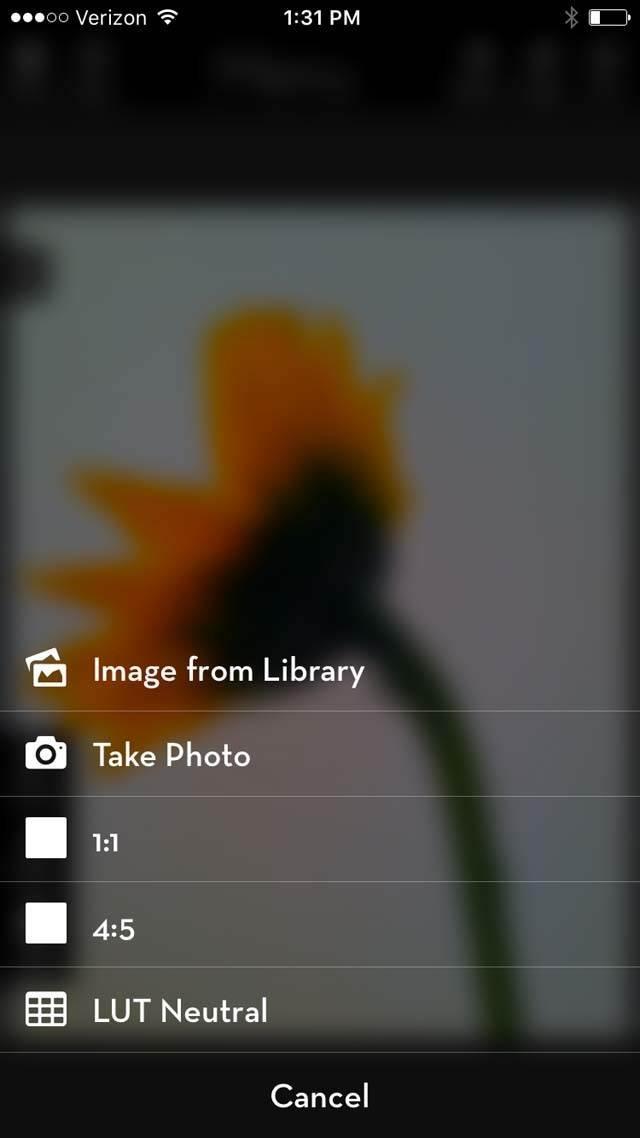 Floral Blur iPhone Photos 12 no script