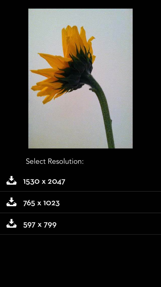 Floral Blur iPhone Photos 13 no script