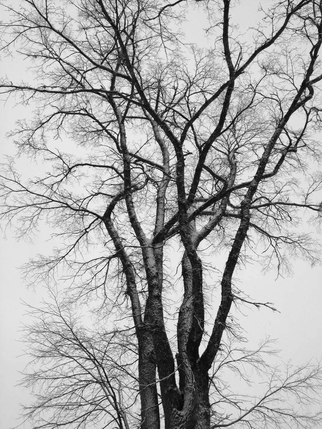 Winter Tree iPhone Photos 31 no script