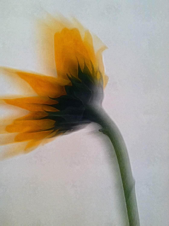 Floral Blur iPhone Photos 8 no script