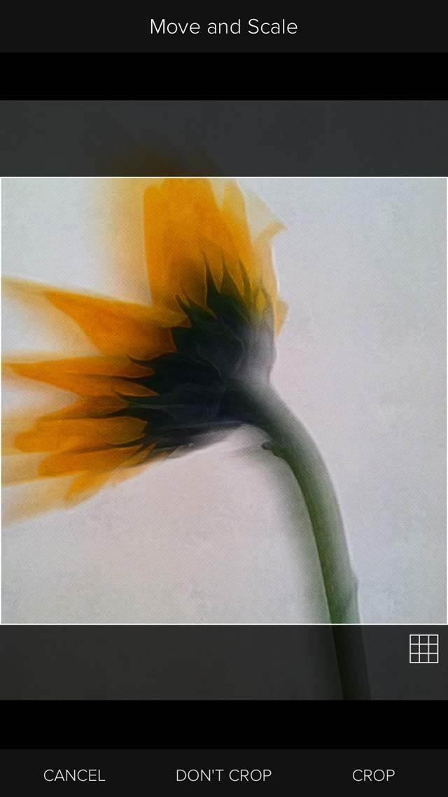 Floral Blur iPhone Photos 28 no script