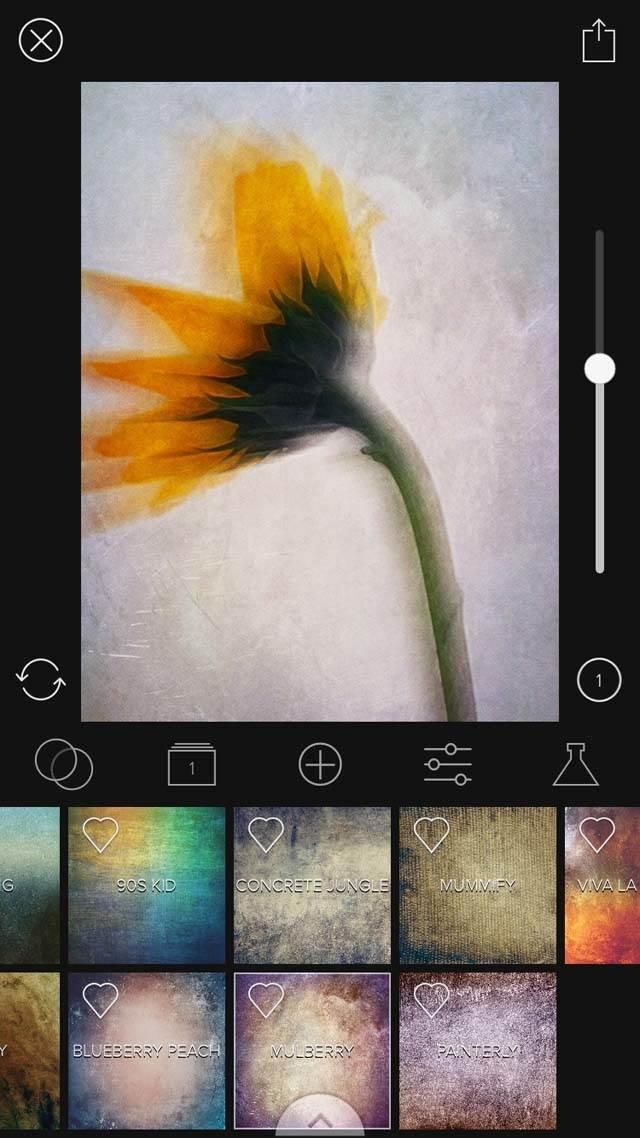 Floral Blur iPhone Photos 30 no script