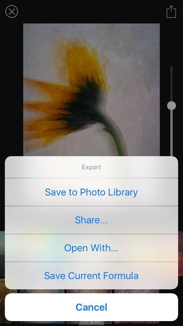 Floral Blur iPhone Photos 31 no script