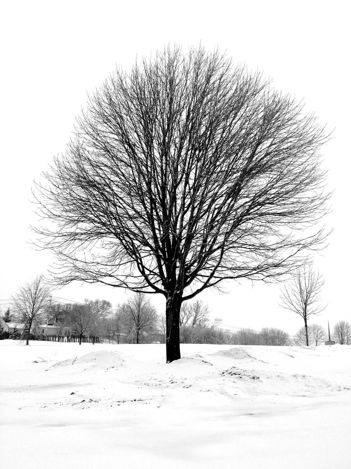 Winter Tree iPhone Photos 32 no script