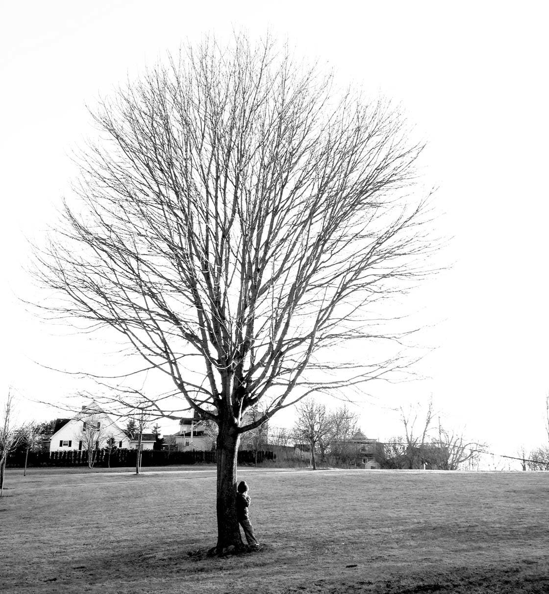 Winter Tree iPhone Photos 17 no script
