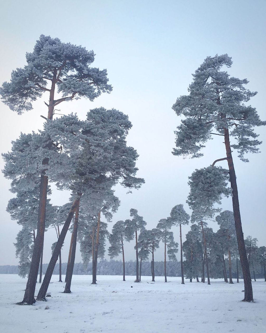 Winter iPhone Photos 2016 4 no script