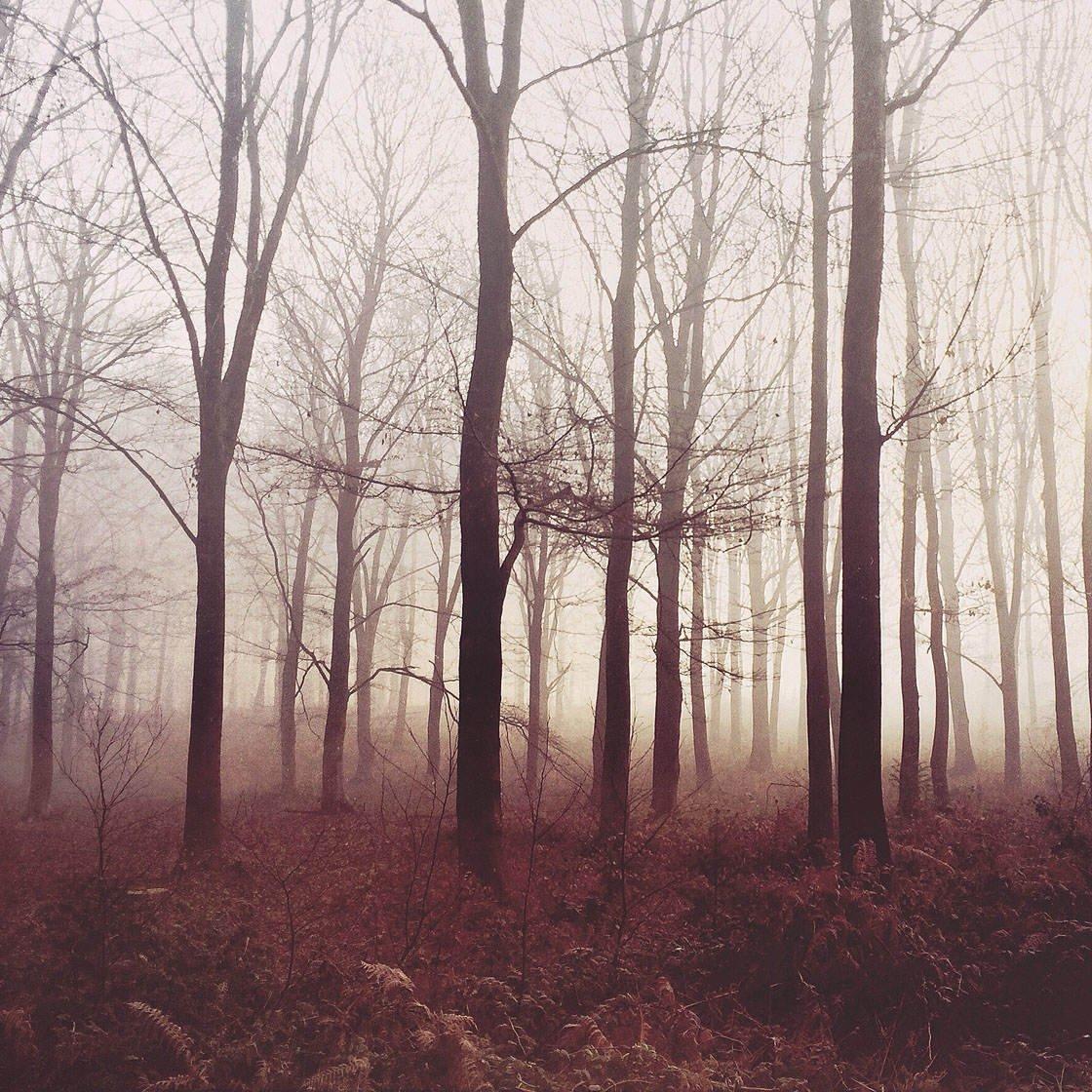 Fog & Mist iPhone Photos 39 no script