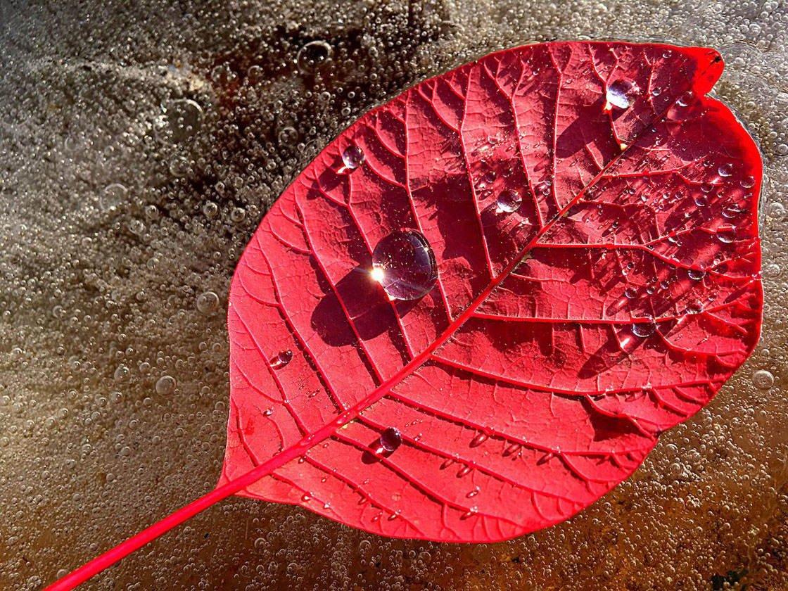 Closeup Macro iPhone Photos 3 no script
