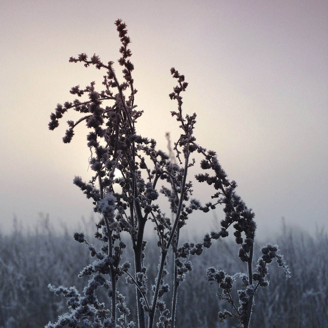 Fog & Mist iPhone Photos 12 no script
