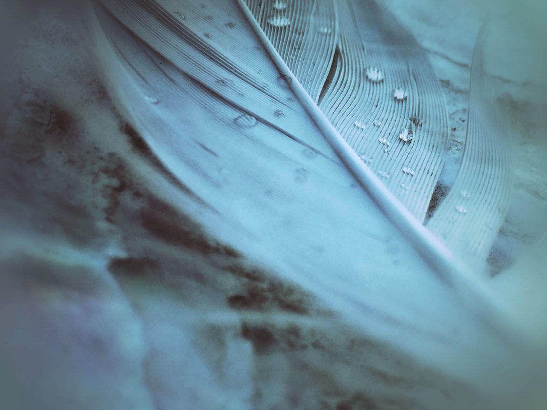Kimberly Saxton-Heinrichs iPhone Photos 7 no script