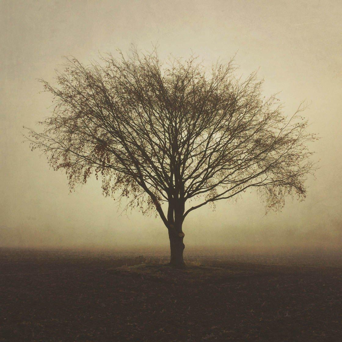 Fog & Mist iPhone Photos 36 no script