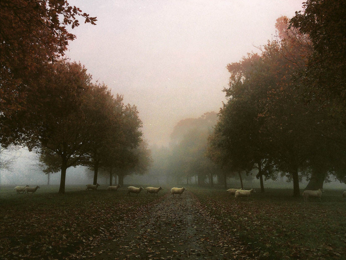 Fog & Mist iPhone Photos 15 no script