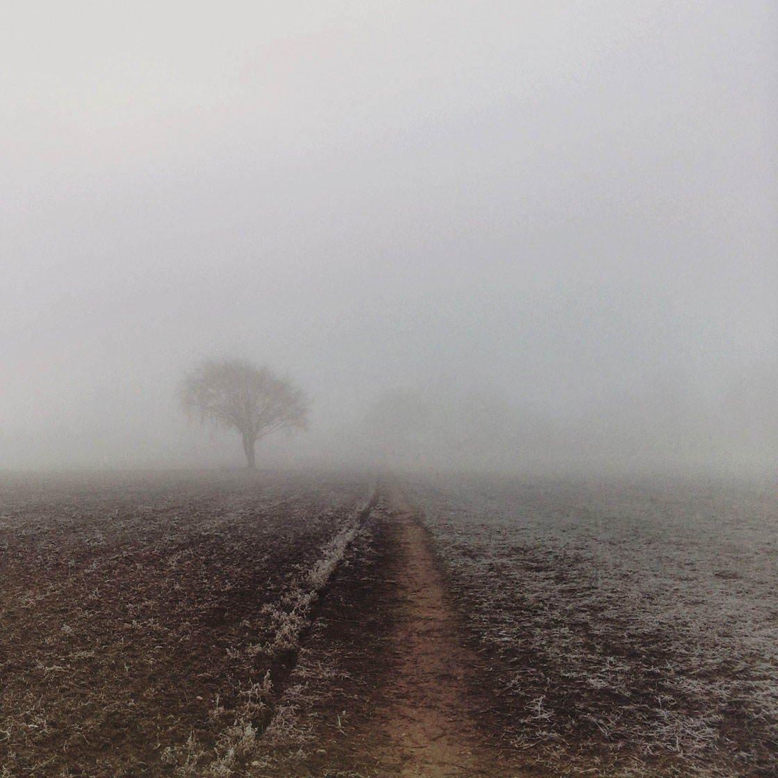 Fog & Mist iPhone Photos 21 no script