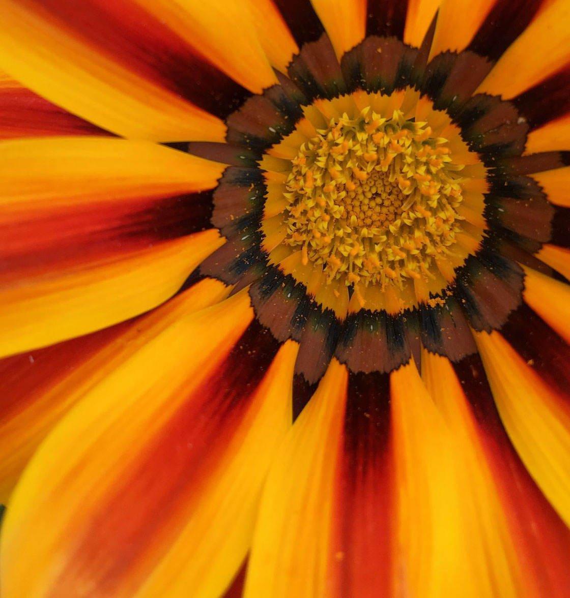 Closeup Macro iPhone Photos 19 no script