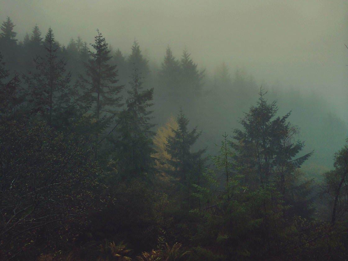 Fog & Mist iPhone Photos 29 no script