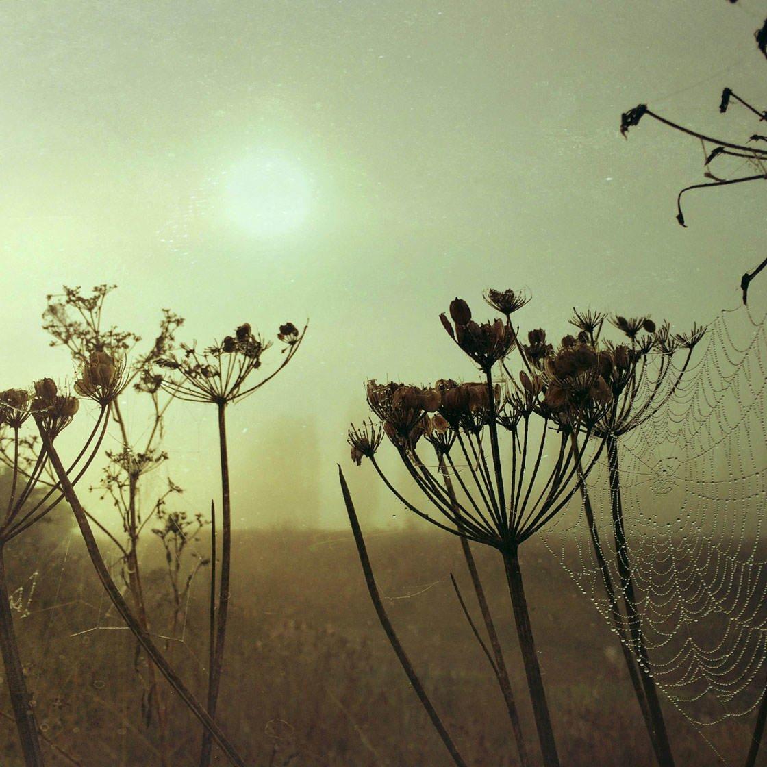 Fog & Mist iPhone Photos 46 no script