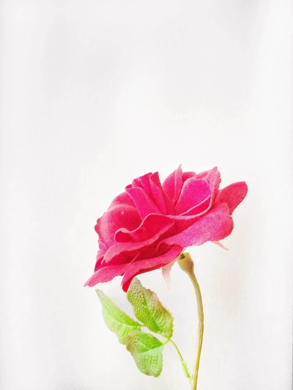 flowers iPhone photo contest-03 no script