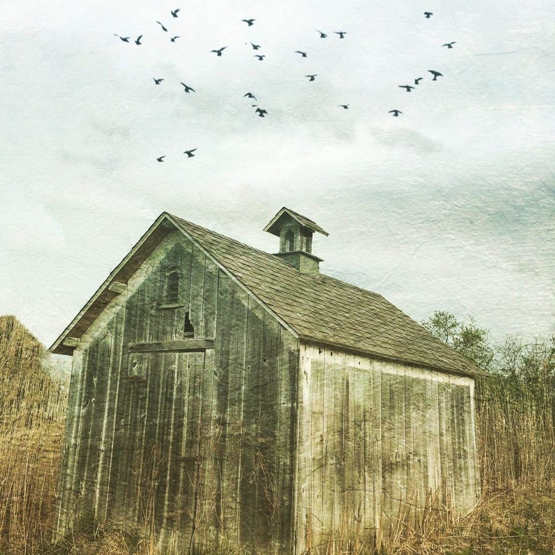Rural Scenes-02 no script