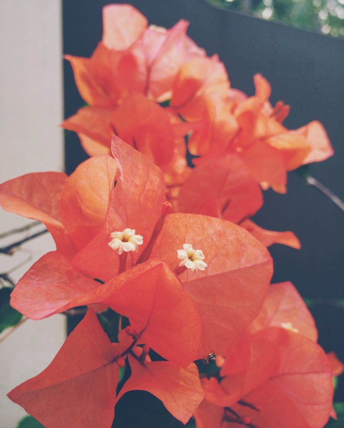 flowers iPhone photo contest-11 no script