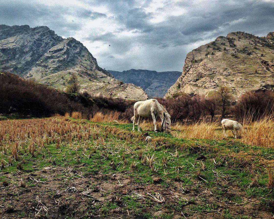 Rural Scenes-10 no script