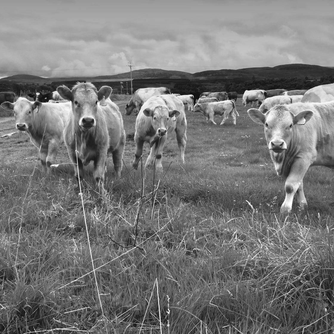 Rural Scenes-13 no script