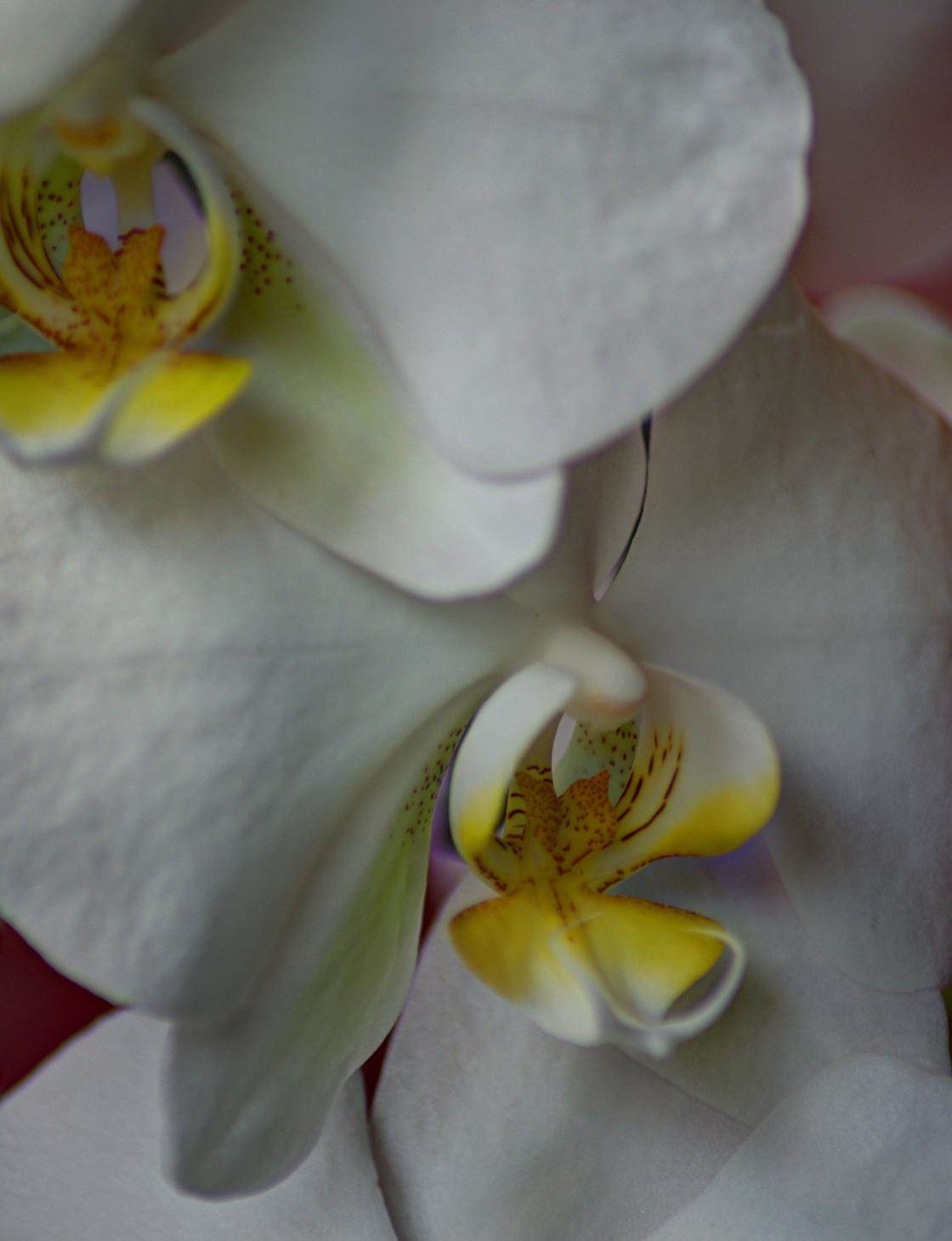 flowers iPhone photo contest-02 no script