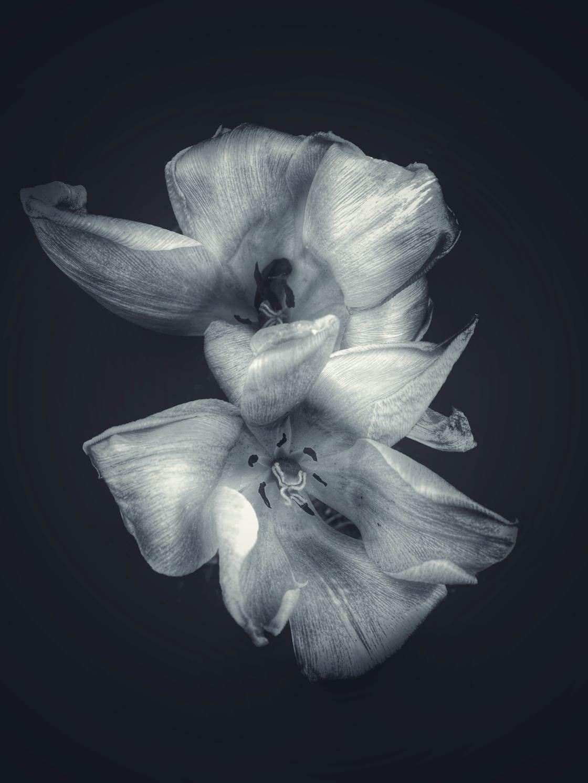 flowers iPhone photo contest-16 no script