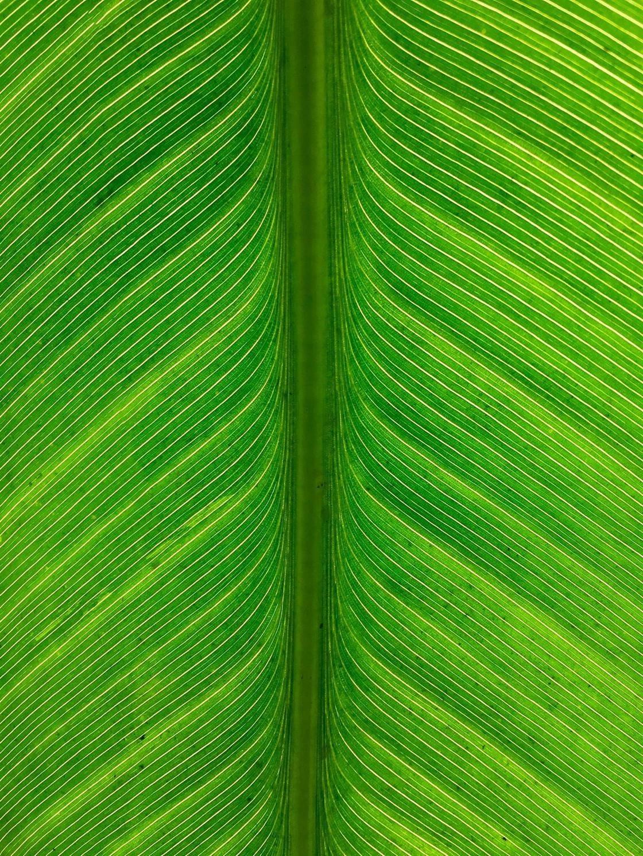 green_iphone_photos-26 no script