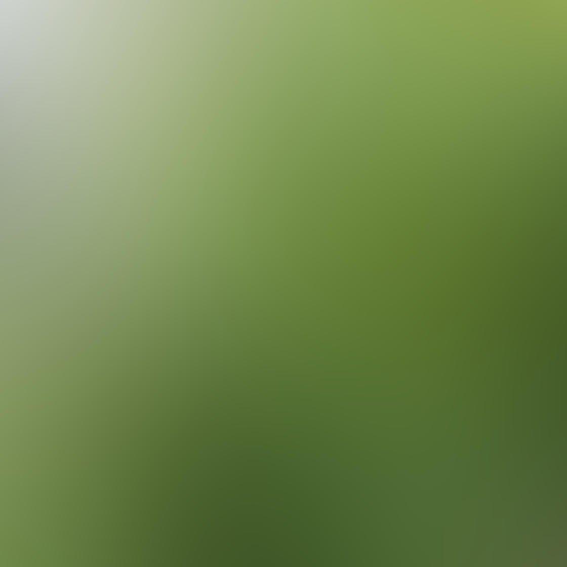 Ordinary iPhone Photo Subjects 8