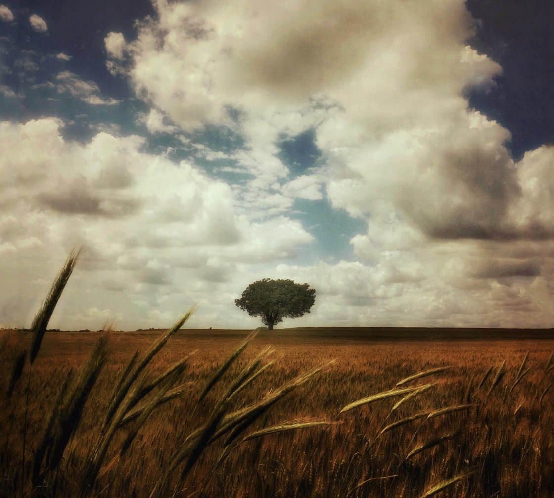 Rural landscape photography 5