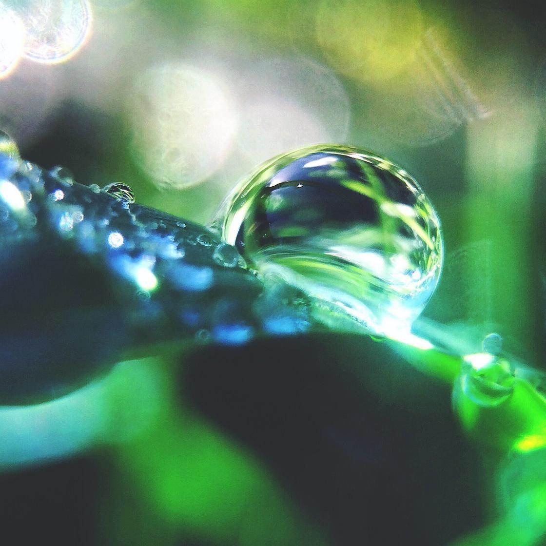 green_iphone_photos-12 no script