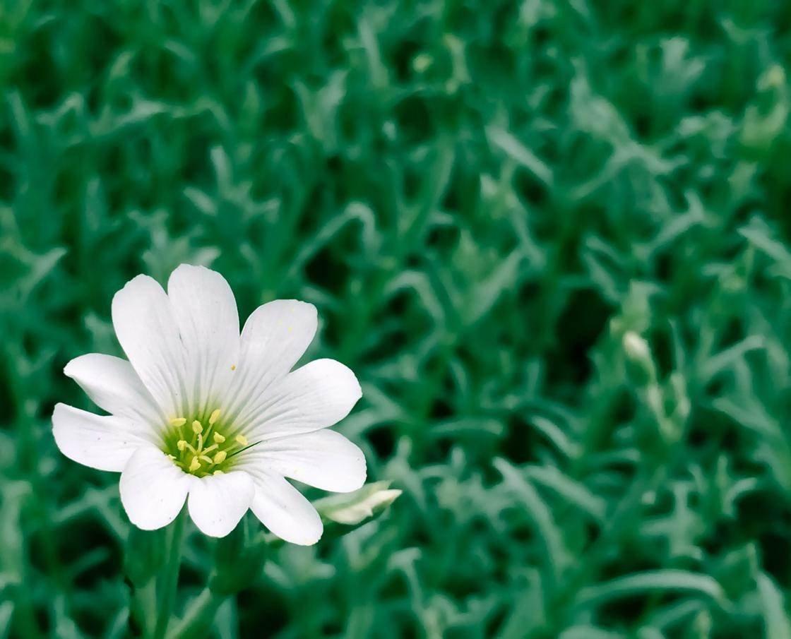 green_iphone_photos-15 no script