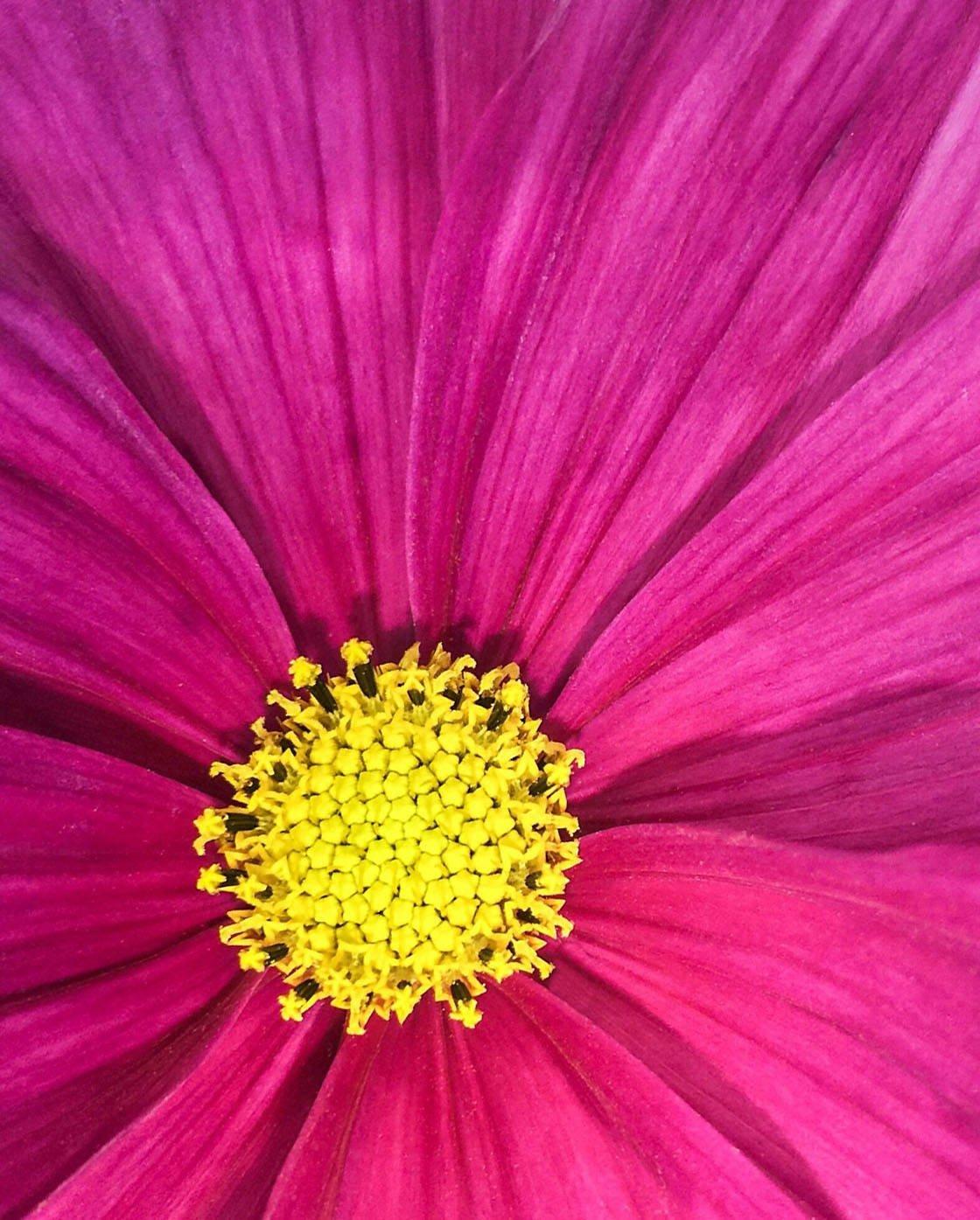 Closeup Macro iPhone Photos 9 no script